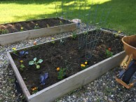 vegetable garden newly planted